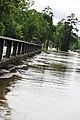 Roman Forest Flood - 4-18-16 (25909408363).jpg