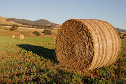 Round hay bale at dawn02.jpg
