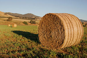 Fodder - Round hay bales