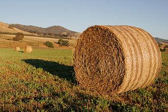 Fodder - Round hay bales