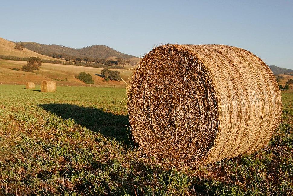 Round hay bale at dawn02