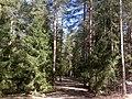 Rustgränden 01280 Vantaa Finland - panoramio (1).jpg