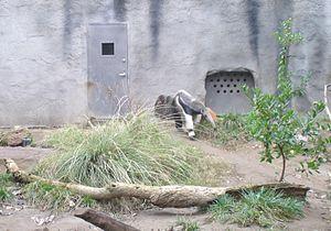 Sacramento Zoo - Image: Sacramento Zoo Anteater