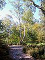 Saint-Prix (95), lieu-dit les Sapins Brûlés, forêt de Montmorency (1).jpg