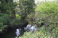 Salary Brook Local Nature Reserve 3.JPG
