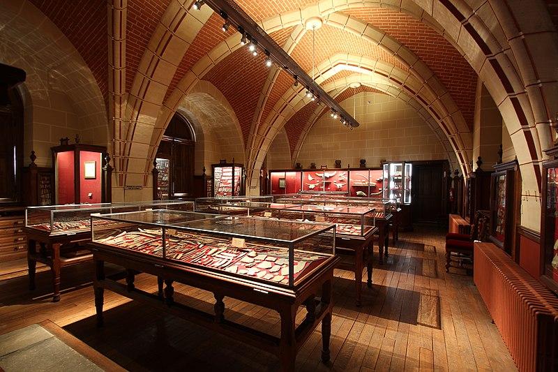 Fichier:Salle Piette au Musée d'Archéologie nationale à Saint-Germain-en-Laye le 27 mars 2017 - 01.jpg