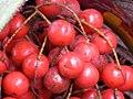 Saribus rotundifolius fruit (35044308075).jpg