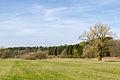 Schlangen - 2015-04-12 - LIP-001 Strothe-Niederung (69).jpg