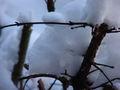 Schnee in Busch 8498.jpg