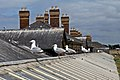 Seagulls perch, Rhyl railway station (geograph 4031363).jpg