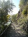 Sentiero dell'olivo Gandria 07.jpg