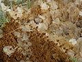 Shedding of leaves (1) (5169237268).jpg