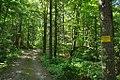 ShelburneStateForest.jpg