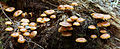 Sieniä!.JPG