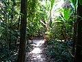 Similan Islands, 2015 march - panoramio (17).jpg