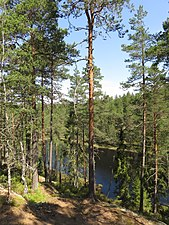 Sjö tallar Tivedens nationalpark.jpg