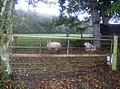 Small sheepfold - geograph.org.uk - 600984.jpg