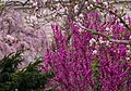 Smithsonian Gardens in April (17427313390).jpg