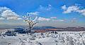 Snow and desert.jpg