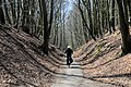 """So called DIgged out road (""""Holle weg"""") to bicycle point 34 near castle Doorwerth - panoramio.jpg"""
