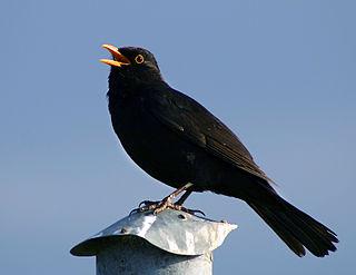 Bird vocalization Sounds birds use to communicate