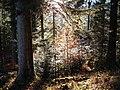 Sommerlicher Herbst Herrenstuhl - panoramio (6).jpg