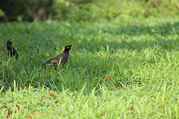 Sparrow grass.jpg