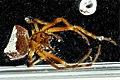 Spider, Patuxent 2012-10-03-16.45 (8051846212).jpg