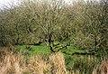 St Ewe, scrub trees and marsh north east of Churchtown - geograph.org.uk - 105056.jpg