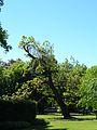 Stadtpark Baum1.JPG