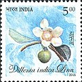 Stamp of India - 2005 - Colnect 158847 - Flora and Fauna of North East India - Dillenia indica Linn.jpeg