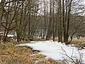 Stare koryto rzeki Wdy.JPG