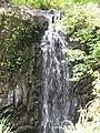 Starr-090702-2026-Psidium guajava-habit and waterfall-Puaa Kaa Park Hana Hwy-Maui (24600711089).jpg