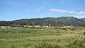 Starr 070403-6490 Araucaria columnaris.jpg