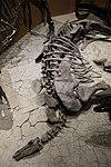 Stegosaurus - Salt Lake City.jpg