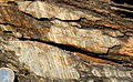 Striated fault plane in sedimentary rock.JPG