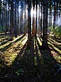 Sunrays - Flickr - Stiller Beobachter.jpg