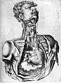 T. Bartholin, cordis, vasorumque exeogressiu Wellcome L0007837.jpg