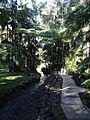 Tamborine Mountain Botanic Gardens 06.JPG