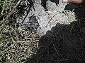 Tarantula u prašumi.jpg