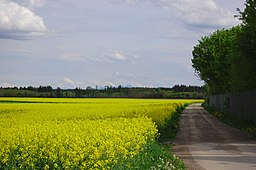 Lanzenhaarer Weg in Taufkirchen