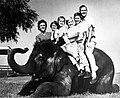 The Bush family poses on an elephant during the 1964 Senate campaign, (L to R) Barbara, Doro, Marvin, Neil, Jeb, George (George W. away at school).jpg