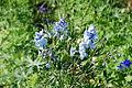 The Flower Fields at Carlsbad Ranch 53 2014-04-28.jpg