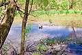 The duck (2508434142).jpg