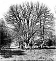 The trees of Great Britain and Ireland (1906) (20781677295).jpg