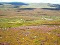 The valley of the Hawkwood Burn - geograph.org.uk - 510432.jpg
