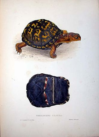 "Thomas Bell (zoologist) - Terrapene clausa from Thomas Bell's ""A Monograph of the Testudinata"" London: 1832–1836"