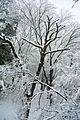 Tokyo snow 2013Jan14 - Flickr - odako1.jpg