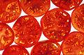 Tomatoes - USDA ARS - K4667-6.jpg