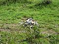 Trümmer Learjet3.JPG
